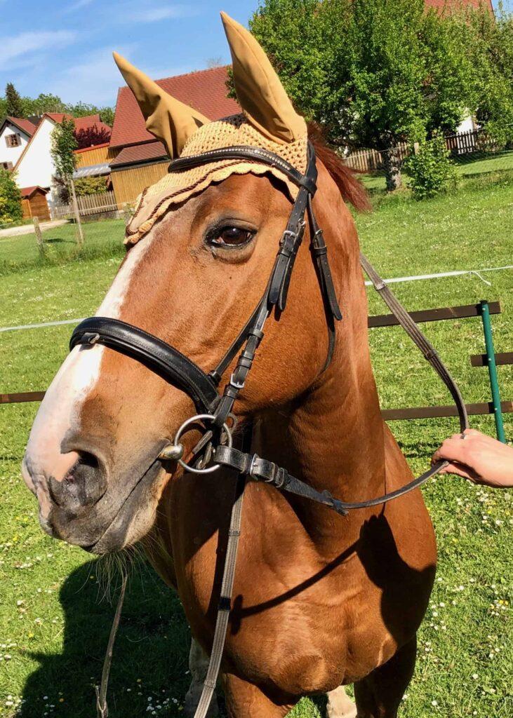 pferd-auf-koppel