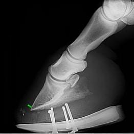Pferdehuf-Röntgenbild