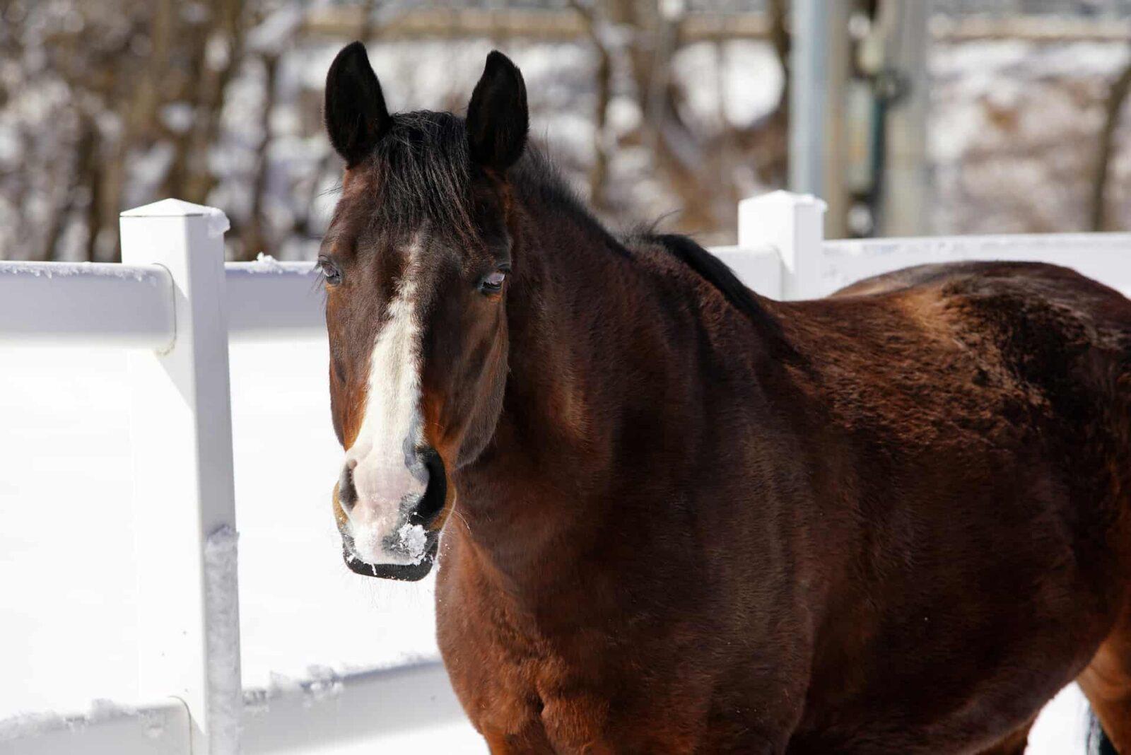 Pferd im Schnee auf Koppel